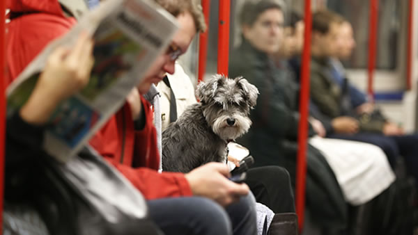 """<div class=""""meta image-caption""""><div class=""""origin-logo origin-image """"><span></span></div><span class=""""caption-text"""">June 20- Take Your Dog to Work Day:  Your dog probably sits at home all day and wonders what you are doing. Today is the day he discovers what that is. (AP Photo/Lefteris Pitarakis)</span></div>"""