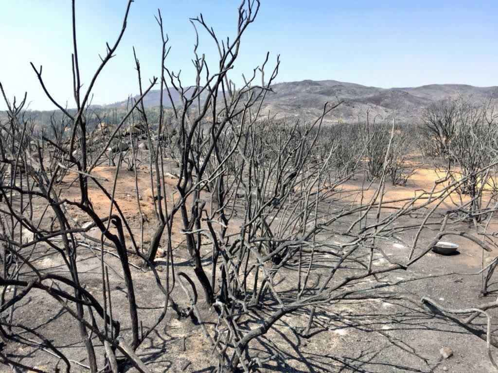 "<div class=""meta image-caption""><div class=""origin-logo origin-image none""><span>none</span></div><span class=""caption-text"">This photo shows just some of the destruction from the Rocky Fire burning in Lake County, Calif. on Thursday, August 6, 2015. (KGO-TV)</span></div>"