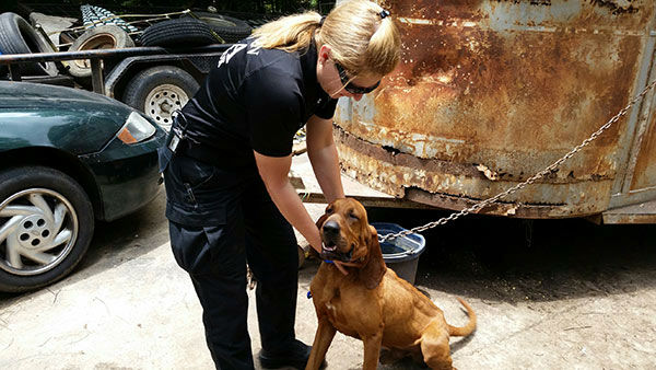 """<div class=""""meta image-caption""""><div class=""""origin-logo origin-image """"><span></span></div><span class=""""caption-text"""">The Houston SPCA is now caring for 14 animals rescued from a home in Liberty County (KTRK Photo/ Houston SPCA)</span></div>"""