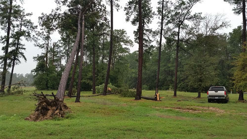 "<div class=""meta image-caption""><div class=""origin-logo origin-image none""><span>none</span></div><span class=""caption-text"">Trees snapped by high winds in Forest Village off of Rayford Road (Photo/iWitness Photo)</span></div>"