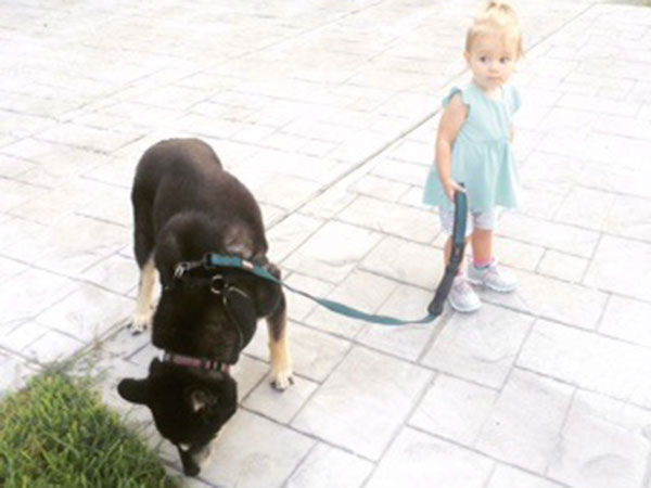 <div class='meta'><div class='origin-logo' data-origin='none'></div><span class='caption-text' data-credit='KTRK/Casey Curry'>ABC-13 Meteorologist Casey Curry's dog Nanook being walked by Winnie</span></div>