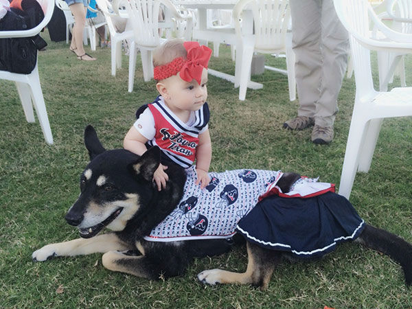 <div class='meta'><div class='origin-logo' data-origin='none'></div><span class='caption-text' data-credit='KTRK/Casey Curry'>ABC-13 Meteorologist Casey Curry's dog Nanook showing its Texans spirit with Baby Winnie</span></div>