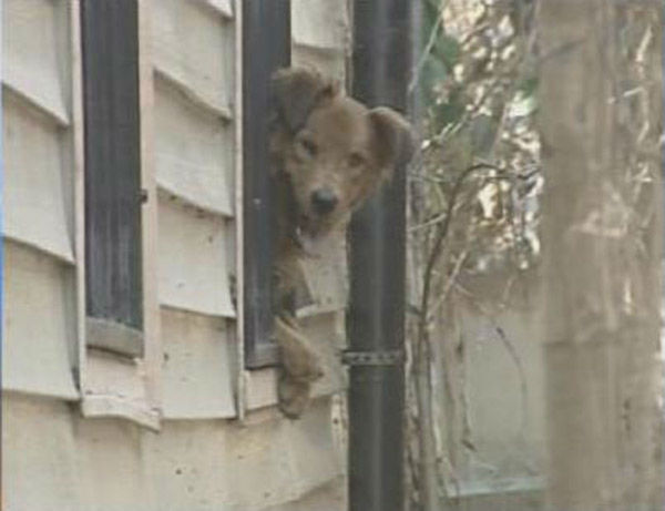 "<div class=""meta image-caption""><div class=""origin-logo origin-image none""><span>none</span></div><span class=""caption-text"">A stranded dog looks through a window as search teams go door to door in Orleans Parish. (WPVI Photo)</span></div>"