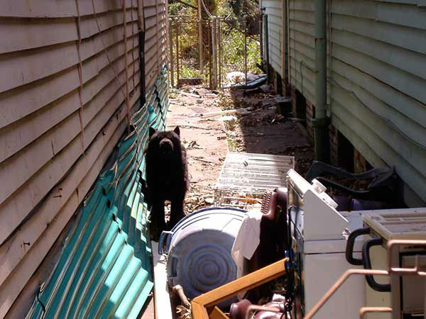 """<div class=""""meta image-caption""""><div class=""""origin-logo origin-image none""""><span>none</span></div><span class=""""caption-text"""">The residents of the hardest hit neighborhoods had to flee without their pets.  A week later, animal control officials went through the area. (WPVI Photo)</span></div>"""