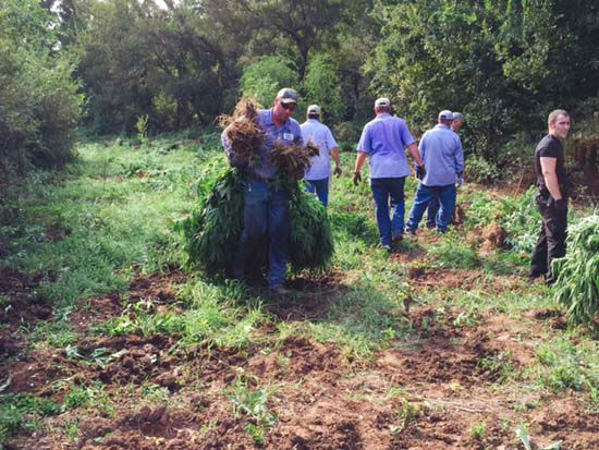 """<div class=""""meta image-caption""""><div class=""""origin-logo origin-image none""""><span>none</span></div><span class=""""caption-text"""">Marijuana plants being destroyed by authorities at the discovered site (KTRK Photo/ Austin County Sheriff's Office)</span></div>"""