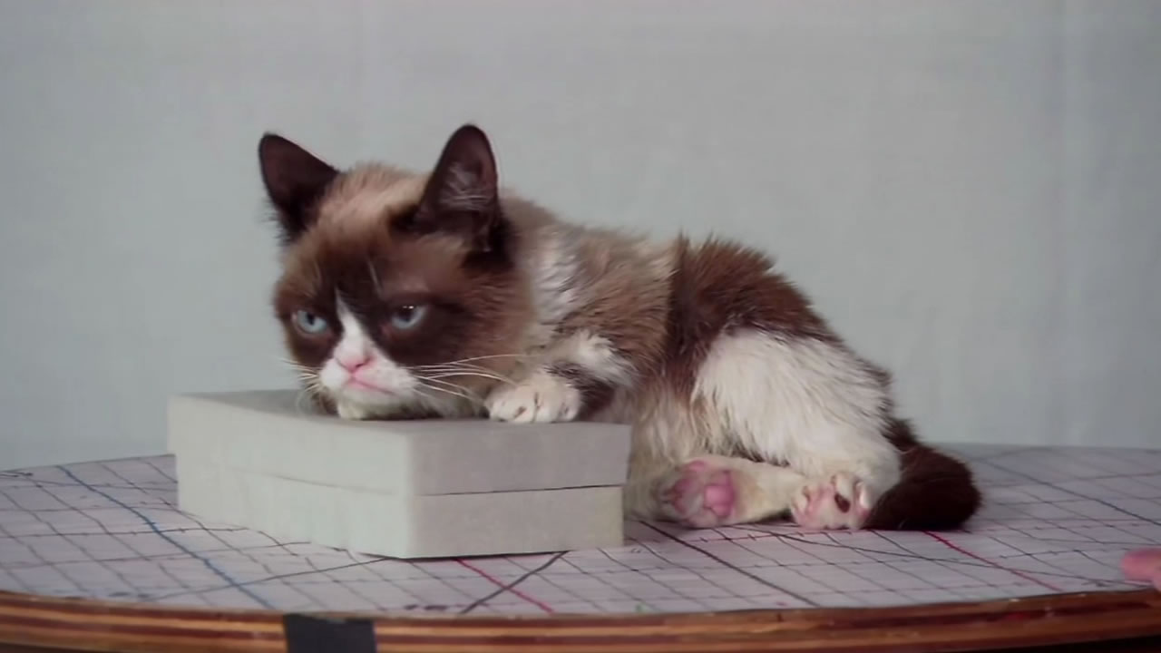 Grumpy Cat, whose real name is Tardar Sauce, gets her signature frown from an underbite and feline dwarfism.