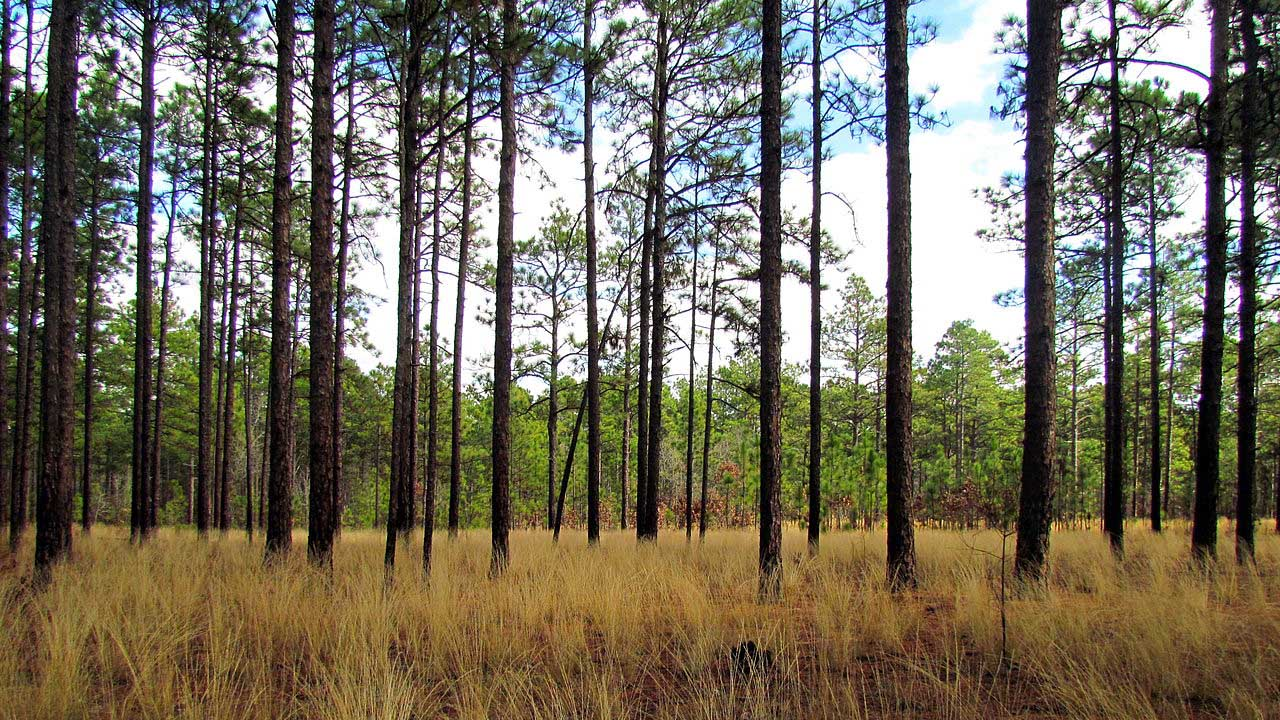 Weymouth Woods Sandhills State Nature Preserve Southern Pines, N.C.