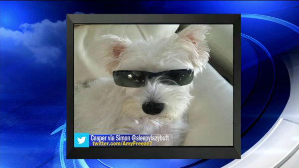 """<div class=""""meta image-caption""""><div class=""""origin-logo origin-image none""""><span>none</span></div><span class=""""caption-text"""">Send us your photos using Twitter and Instagram using the hashtags #SuperCatSaturday or #BigDogSunday, or send photos to Amy via Twitter @AmyFreeze7</span></div>"""