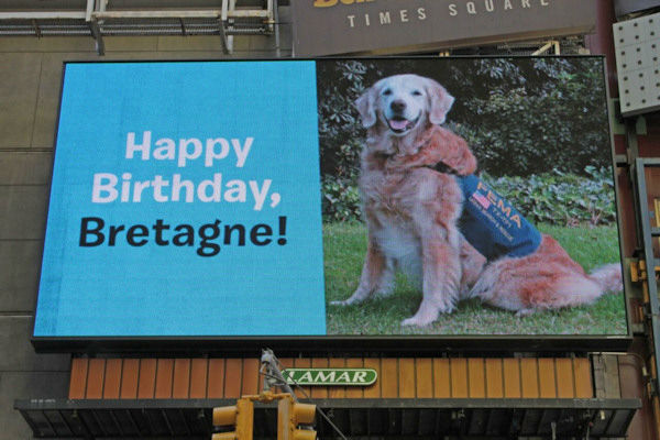 <div class='meta'><div class='origin-logo' data-origin='none'></div><span class='caption-text' data-credit='Photo/BarkPost'>She got a grand welcome to the city, including a billboard in Times Square wishing her a happy birthday.</span></div>