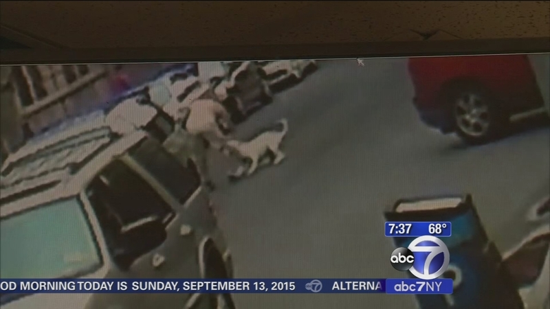 Pit bull mauls man in middle of street