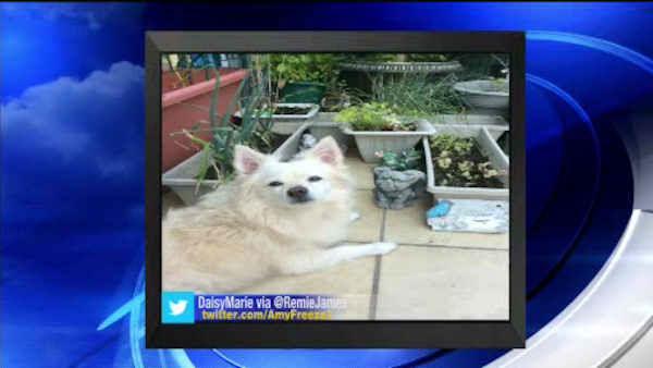 """<div class=""""meta image-caption""""><div class=""""origin-logo origin-image none""""><span>none</span></div><span class=""""caption-text"""">Big Dog Sunday - Sept. 13, 2015</span></div>"""