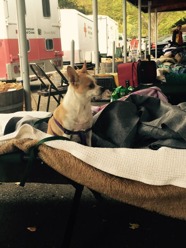 "<div class=""meta image-caption""><div class=""origin-logo origin-image none""><span>none</span></div><span class=""caption-text"">Pets were not allowed inside Red Cross Shelter, so owners got food and supplies for their dog at Napa fairgrounds on Sunday, September 13, 2015. (KGO-TV)</span></div>"