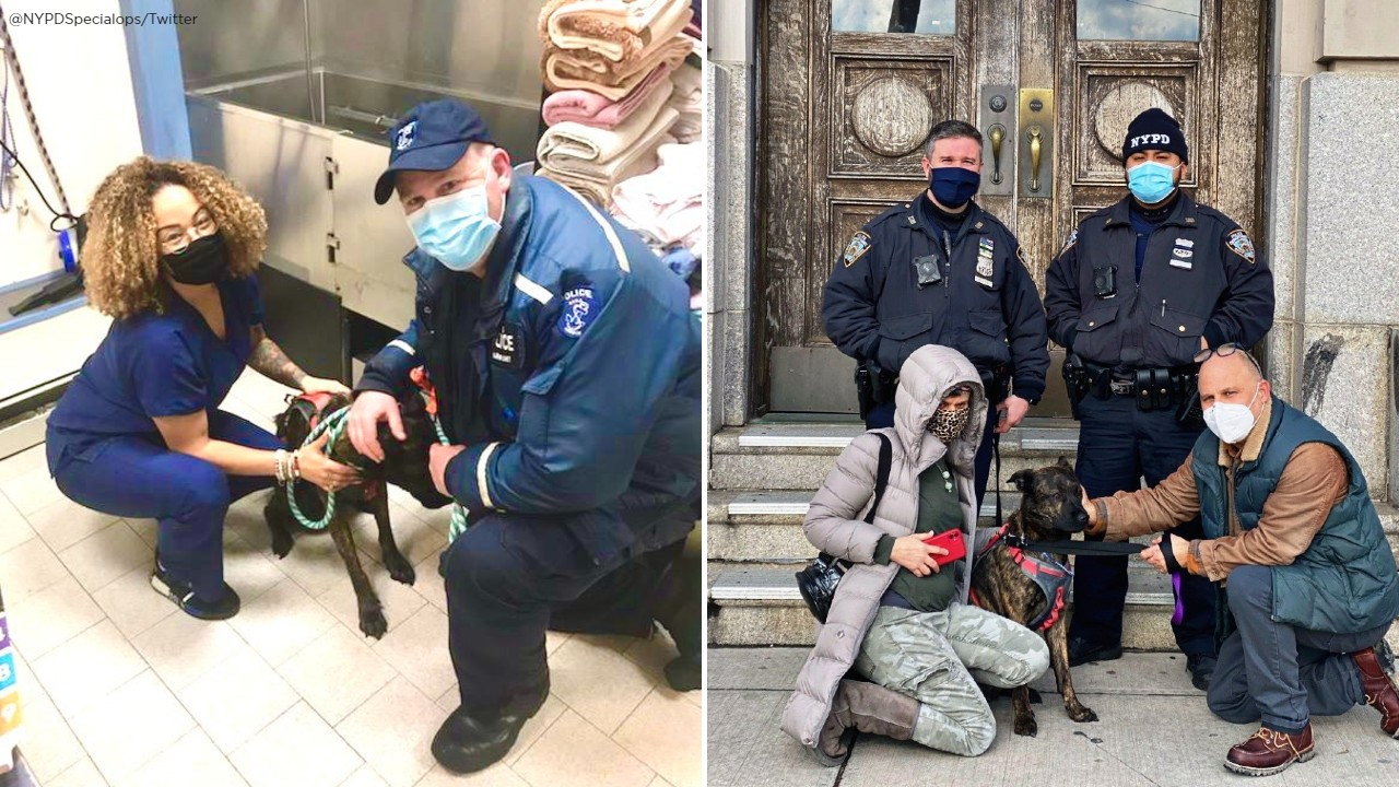 NYPD saves dog in danger of drowning in frigid water in Queens
