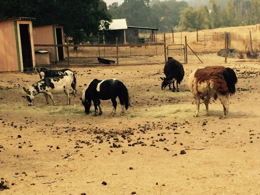 "<div class=""meta image-caption""><div class=""origin-logo origin-image none""><span>none</span></div><span class=""caption-text"">The animals are OK at Herbert Ander's ranch near Hidden Lakes, Calif. on Tuesday, September 15, 2015. (KGO-TV)</span></div>"