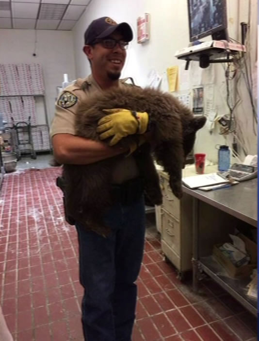 A bear broke into a Colorado Springs pizzeria on Monday, September 14, 2015.